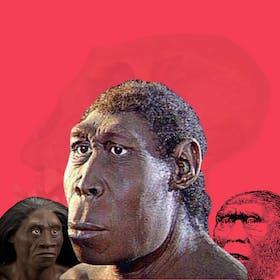 Gambar sampul 7 Manusia Purba yang Pernah Ditemukan di Indonesia