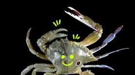 Mengupas Perbedaan Kepiting dan Rajungan