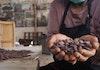 Kakao Fermentasi Jembrana Menembus Pasar Dunia [Bagian 2]