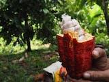 Ini Hadiah Tahun Baru Gubernur Bali Terhadap Petani Lokal