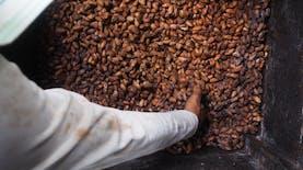 Kakao Fermentasi Jembrana Menembus Pasar Dunia [Bagian 3]