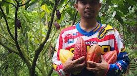 Kakao Fermentasi Jembrana Menembus Pasar Dunia [Bagian 4]