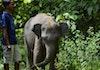 """Ternyata, Manusia Bisa """"Mengerti"""" Keinginan Gajah"""