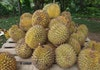 5 Lokasi Makan Durian Terbaik di Indonesia