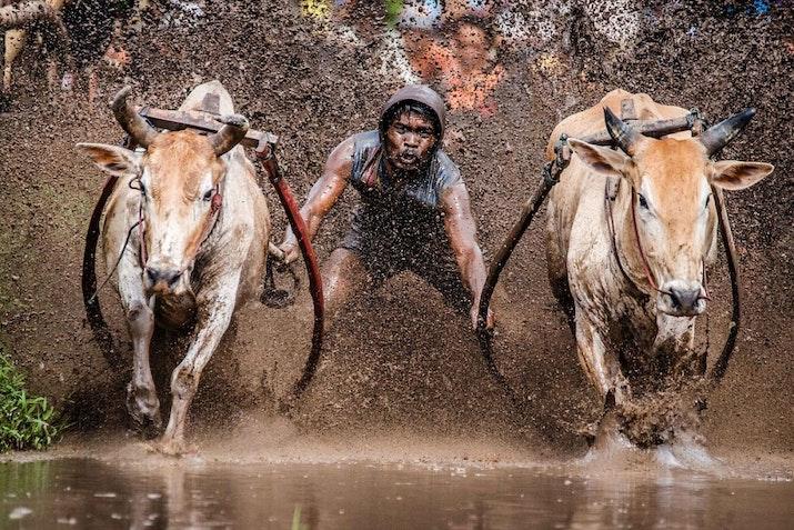 Serunya Perayaan Akhir Musim Panen di Sumatra Barat