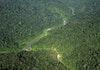 2.778 Hektar Hutan Leuser Telah Direstorasi