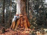 Gambar sampul Tahukah Kamu? Pohon Terbesar Dunia Ada di Indonesia!