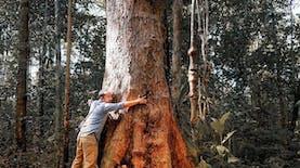 Tahukah Kamu? Pohon Terbesar Dunia Ada di Indonesia!