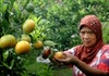 Tak Lagi Andalkan Impor, Indonesia Tingkatkan Ekspor Komoditas Ini