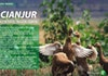 PAST - PRESENT - FUTURE In Cianjur
