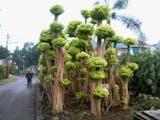 Gambar sampul Dari Kumuh, Kini Jadi Kebun Bonsai
