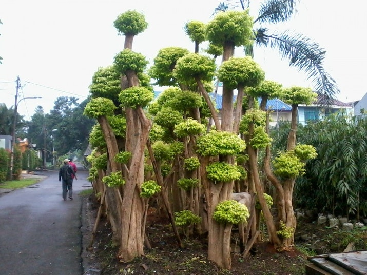 Dari Kumuh, Kini Jadi Kebun Bonsai