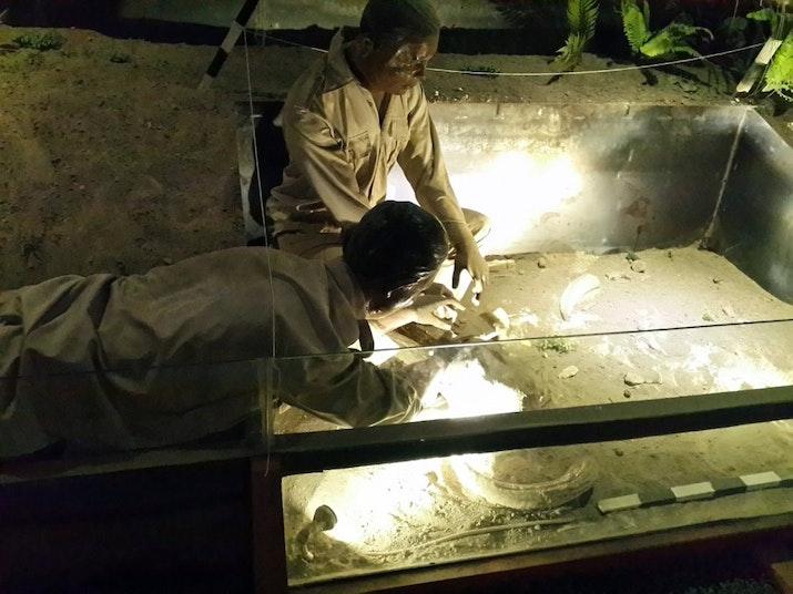 Salah Satu Pusat Evolusi Manusia di Dunia Berlokasi di Pulau Jawa. Ternyata Telah Diakui UNESCO!