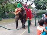 Gambar sampul Kebun Binatang Surabaya Pilihan Asyik Mengisi Liburan