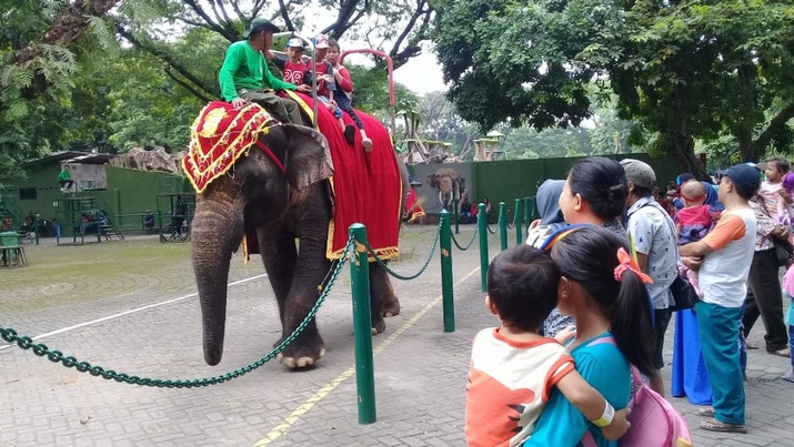 Kebun Binatang Surabaya Pilihan Asyik Mengisi Liburan