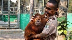 6 Penghuni Baru Hutan Kehje Sewen