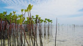 10.000 Ditanam Sebagai Aksi Pencegahan Tsunami dan Manifestasi Rasa Syukur Terhadap Alam
