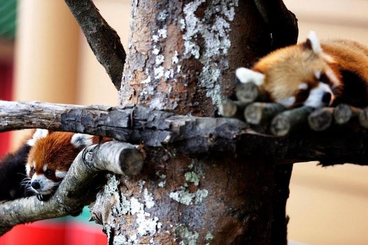Hore! Diplomat Negeri Tirai Bambu Ini Beranak di Indonesia