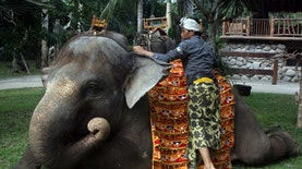 Tumpek Kandang : Tradisi Upacara Sayangi Hewan ala Masyarakat Hindu di Bali