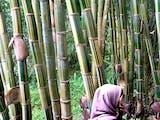 Gambar sampul Taman Bambu, Penyelamat Mata Air Sekaligus Tempat Wisata Edukasi