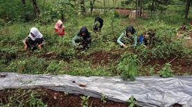 Begini Cerita Sekolah Pinggir Hutan yang Ajarkan Kearifan Lingkungan