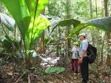 Gambar sampul Berdaun Raksasa! Tanaman unik Ini Ditemukan di Sumatera Utara