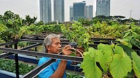 Selama PSBB, Tren Urban Farming di Jakarta Meningkat