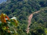 Gambar sampul Telusuri Hutan Perawan Kalimantan, Tim Serigala Rider Bawa Pesan untuk Pemerintah