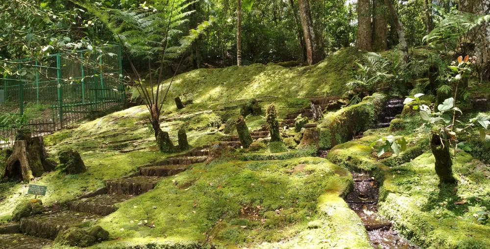 Taman Lumut Koleksi Unggulan Kebun Raya Cibodas Good News