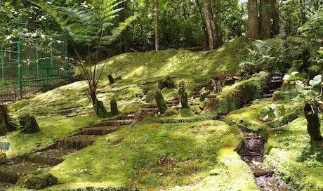 Taman Lumut, Koleksi Unggulan Kebun Raya Cibodas