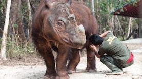 Hanya Badak Sumatera di Hati Mereka