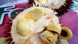 Di Pegunungan Meratus Ada Ragam Durian yang Mungkin Anda Tidak Pernah Tahu Sebelumnya!