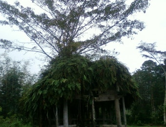 5 Pohon Ajaib yang hanya ada di Indonesia