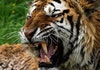 5 Organisasi Konservasi Hewan Langka di Indonesia