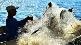 Perairan Teluk Hadakewa: Dulu Marak Potas dan Bom Ikan, Sekarang Dilindungi lewat Adat
