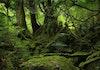 Makhluk Teraneh di Dunia, Konon dari Negeri Dongeng, Ada di Hutan Sulawesi