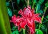 Siapa Sangka Bunga Indah nan Cantik Ini Ternyata Bumbu Penyedap?