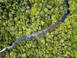 Gambar sampul Benteng Terakhir Keragaman Alam yang Unik, Satu-satunya yang Tersisa di Dunia