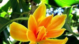 Beda Daerahnya, Beda Flora Identitasnya
