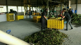 Hebat! Perusahaan Jamu Asli Indonesia Berekspansi Hingga Nigeria