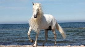 5 Hal Yang harus kalian Ketahui Tentang Susu Kuda