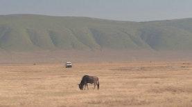 Enam Lokasi Safari Terbaik di Luar Afrika
