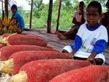 Gambar sampul 5 Buah Khas Papua yang Memiliki Banyak Khasiat
