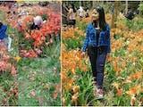 Ingat Taman Bunga di Gunungkidul yang Hancur Diinjak-injak Tahun Lalu? Ini Kondisinya kini