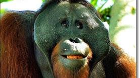 Amazing Borneo