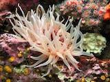 Anemon Laut, Si Cantik yang Bisa Membahayakan