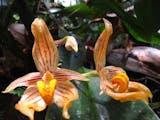 Gambar sampul Tumbuhan-tumbuhan Tak Biasa dari Batang Toru