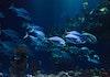 Mirip Bikini Bottom, Restoran Aquarium Kini Ada di Bali