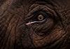 Gajah Prasejarah Raksasa dari Majalengka