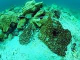 Gambar sampul Agar Terumbu Karang Terjaga, Ini yang Diperlukan Sebelum Menyelam
